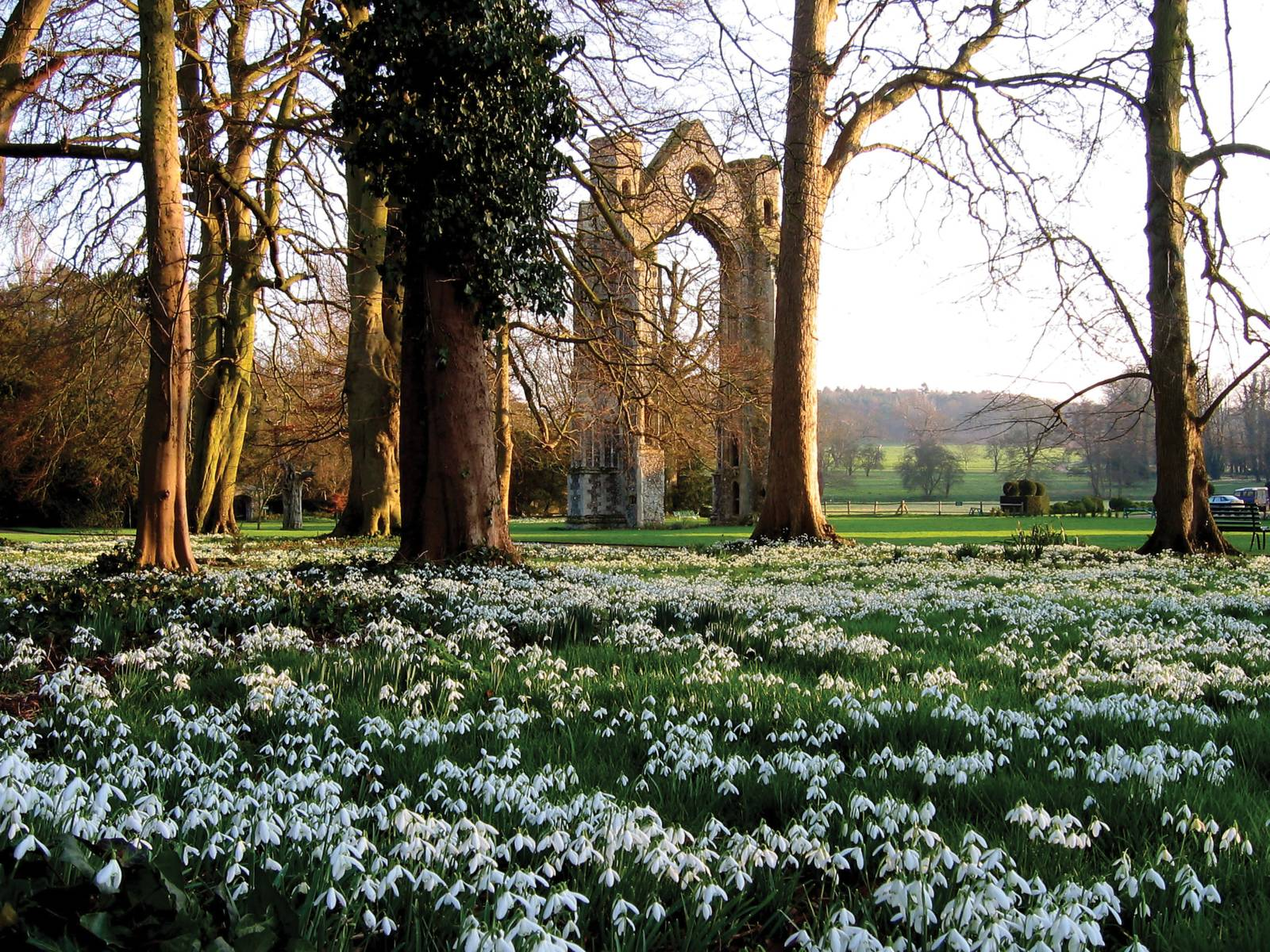 Walsingham Abbey Snowdrops and east wing